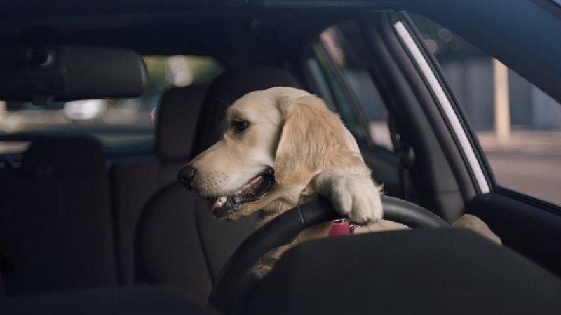 Get Ready To Wag Your Tail: The Barkleys Return In Subaru's Latest Commercial