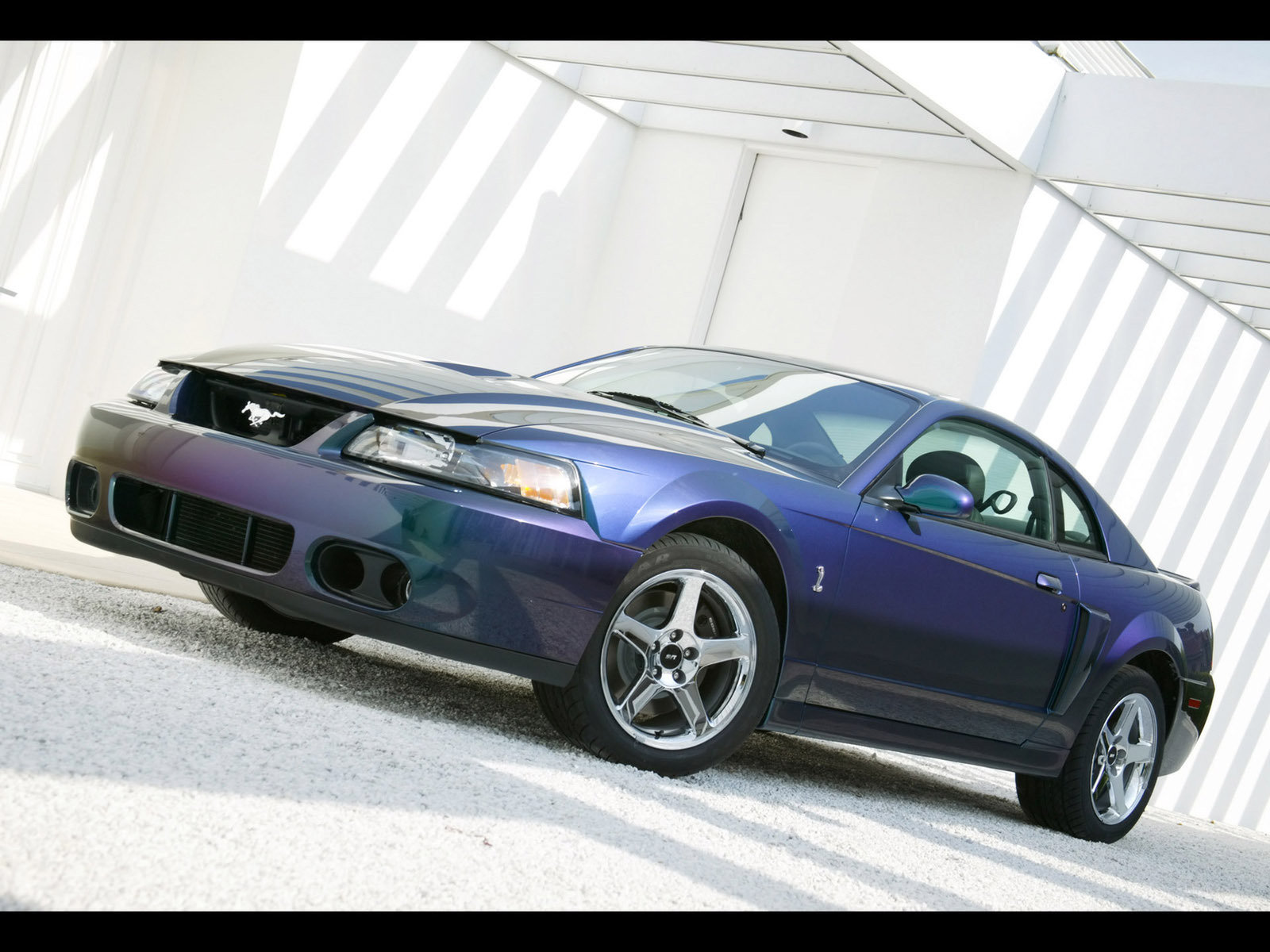 2003 2004 ford svt mustang cobra picture 51260 car review top speed. Black Bedroom Furniture Sets. Home Design Ideas