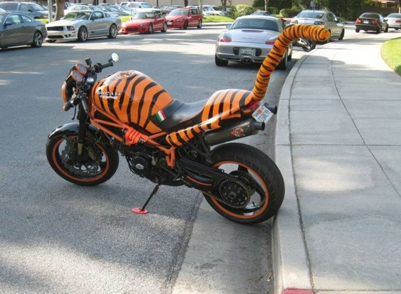 Ducati Monster Transforms Into Angry Cattish Pictures Photos