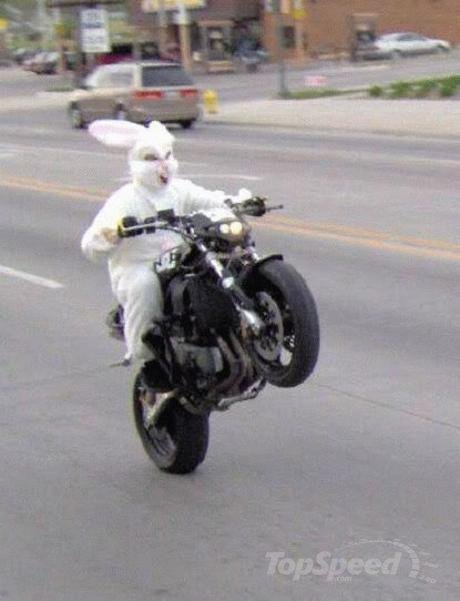 funny easter bunny pics. easter bunny is crazy for
