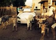 2014 A Jaguar owner uses donkeys to pull his car to the dealership - image 569316