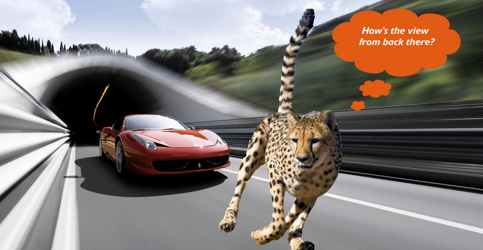Speed Thrills Meet The Animal That Can Outsprint Your